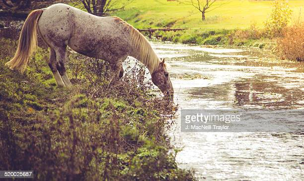 appaloosa morning - appaloosa stock pictures, royalty-free photos & images