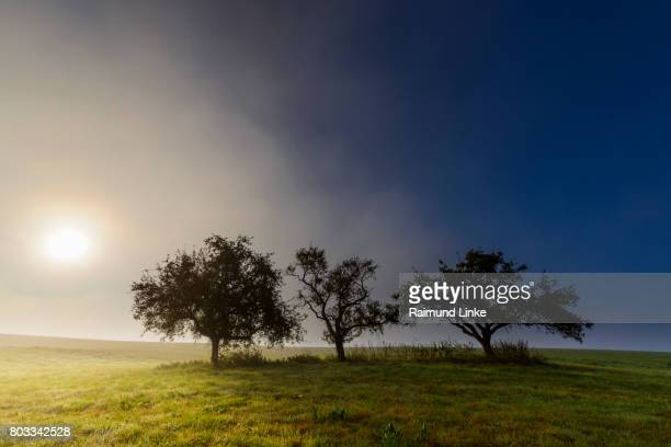 Appel trees with morning mist and sun, Moenchberg. Bavaria, Germany