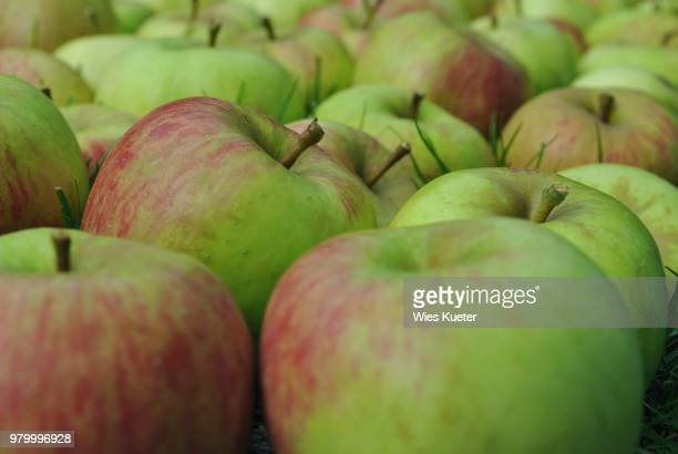 appels in gras - gras stock pictures, royalty-free photos & images