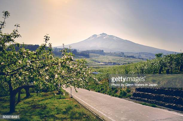apple blossoms and iwaki mountain - aomori prefecture stock pictures, royalty-free photos & images