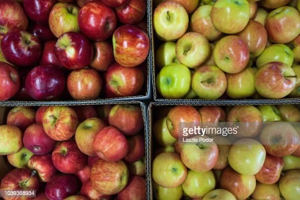 apple for sale at a market - bancarella di verdura foto e immagini stock