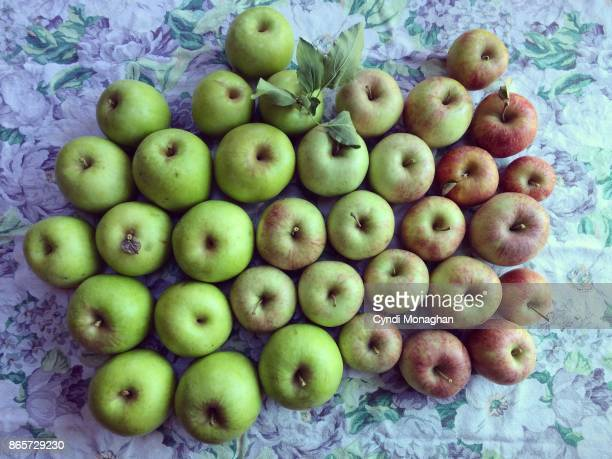 apple haul - harvest table stock pictures, royalty-free photos & images