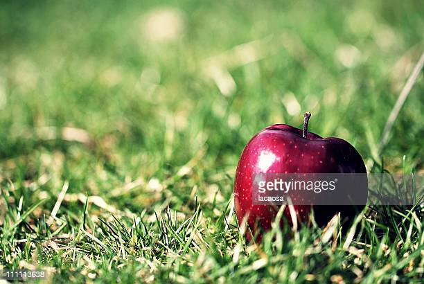 Apple in grass