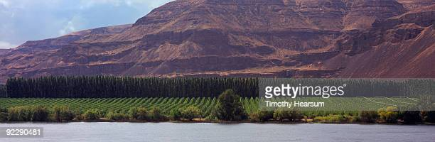 apple orchard with river, poplars and mountain - timothy hearsum stockfoto's en -beelden