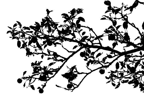 Запутанные ветви