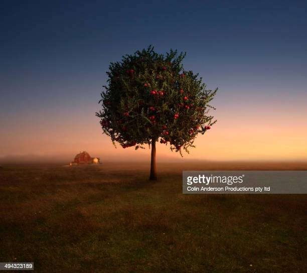 apple tree growing in rural field - appelboom stockfoto's en -beelden