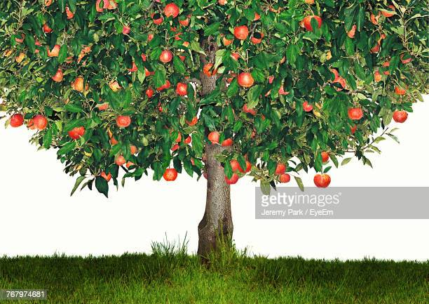 apple tree growing on field - appelboom stockfoto's en -beelden