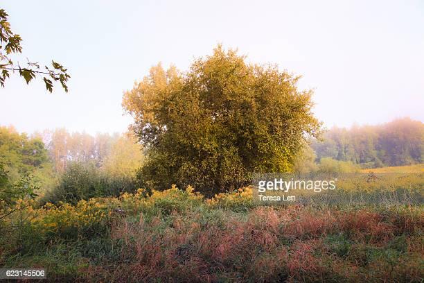 Apple tree in autumn
