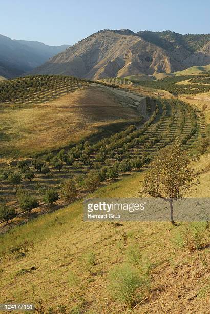apple tree orchard like river in  mountain - bernard grua photos et images de collection