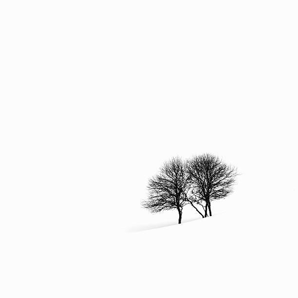 Apple trees in a snowy landscape