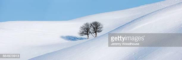 Apple trees in snowy landscape