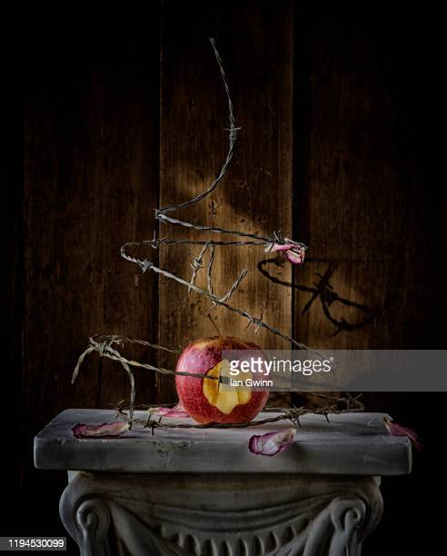 apple wrapped in barbed wire - ian gwinn stock pictures, royalty-free photos & images
