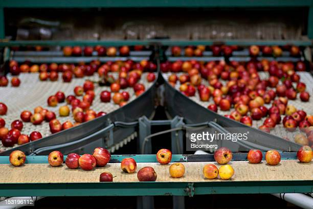 Apples are moved on conveyor belts during sorting and packaging at Jack Brown Produce Inc in Sparta Michigan US on Thursday Sept 27 2012 John...