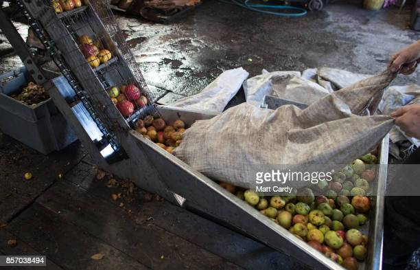 Apples are pressed to make traditional cider at Lands End farm in the village of Mudgley on October 3 2017 in Somerset England The farm has been...