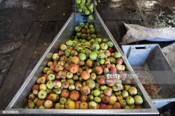 Apples are pressed to make traditional cider at Lands End farm in the village of Mudgley on October 3, 2017 in Somerset, England. The farm has been...