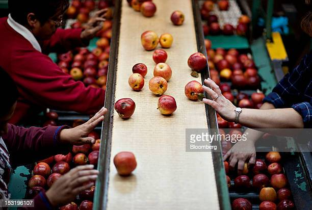 Apples are sorted on the packing line at Jack Brown Produce Inc in Sparta Michigan US on Thursday Sept 27 2012 John Schaefer president of Jack Brown...