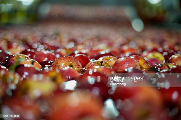 Apples float as they travel down the packing line at Jack Brown Produce Inc in Sparta Michigan US on Thursday Sept 27 2012 John Schaefer president of...