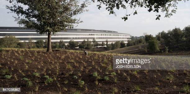 Apple's new headquarters building Spaceship in Cupertino California on September 12 2017