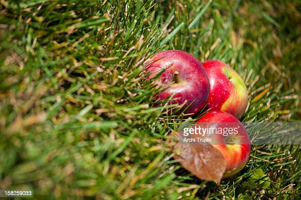 Apples on grass