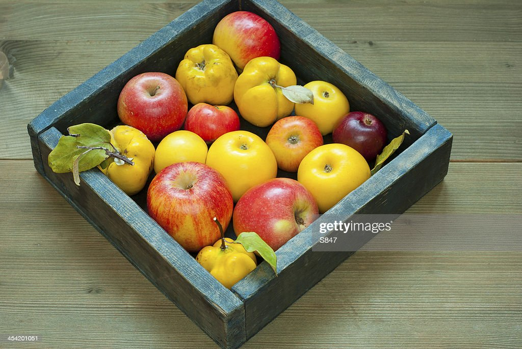 Apples, quinces : Stock Photo