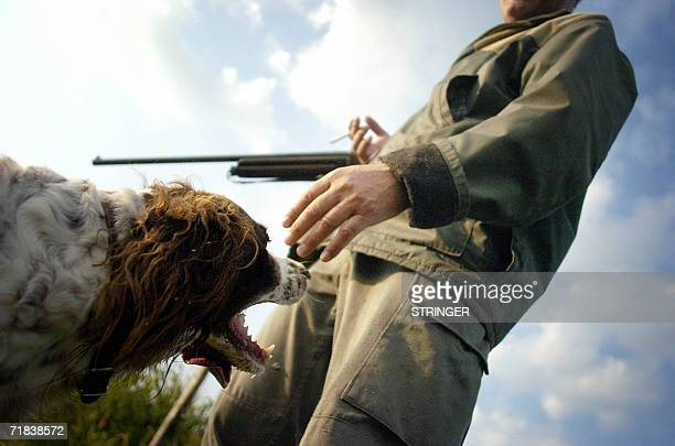 TO GO WITH AFP STORIES ON HUNTING OPENING L'OUVERTURE DE LA CHASSE EN FRANCE A game hunter pats his dog after bringing back the pheasant he shot 10...