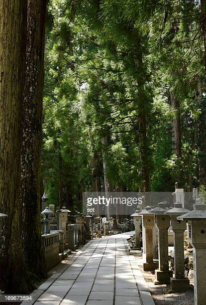 approach to a shrine of japanese cedar trees - koyasan stock-fotos und bilder