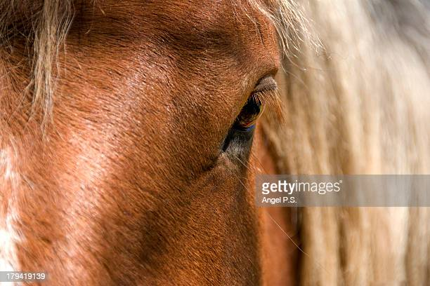 approach to the head of a horse in the pyrenees. - hairy p stock pictures, royalty-free photos & images