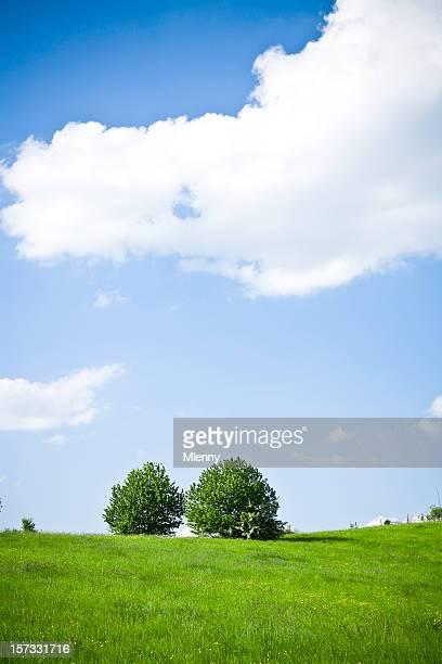 nähern im sommer - mlenny stock-fotos und bilder