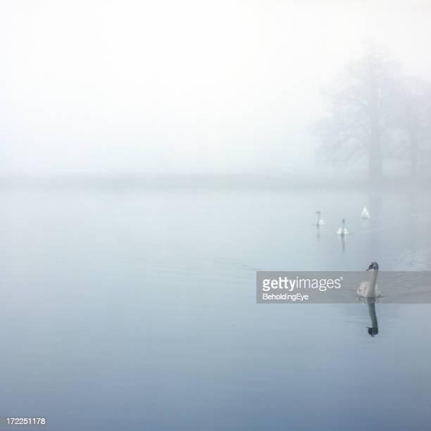 Nähern Swans XL