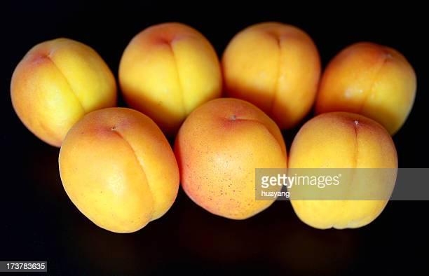Apricot of Matsuyo