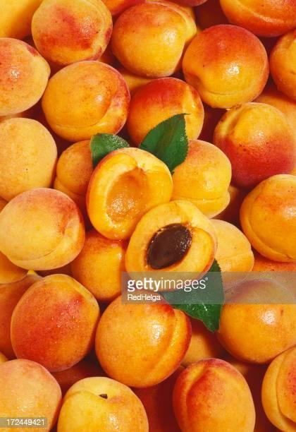 Apricot wallpaper (2)