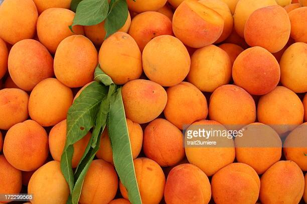 Apricots at a farmers market
