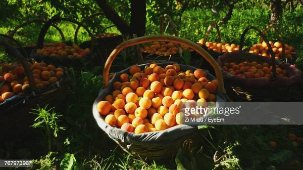 Apricots In Baskets On Field