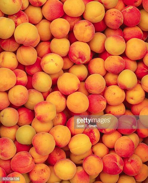 apricots - apricot stock pictures, royalty-free photos & images
