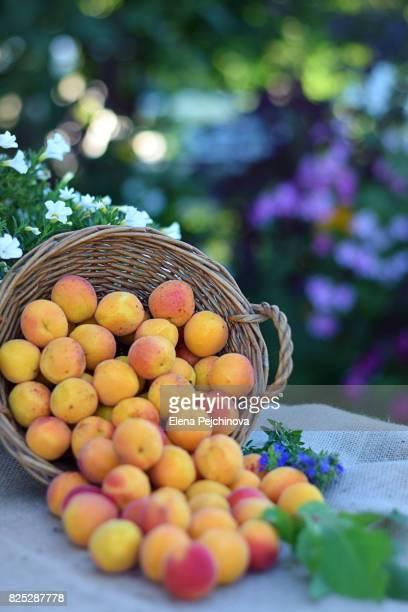 Apricots season