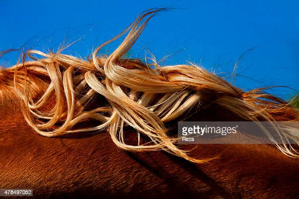 April 15 Hippodrome Bine Absheron Peninsula Azerbaijan The fabled and rare Karabakh horses play a culturally very important role in Azerbaijan They...