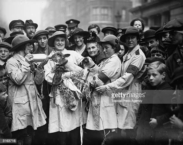 Members of the Women's Land Army feeding lambs during a pause in their march through London