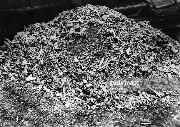 Buchenwald Concentration Camp a heap of bones of concentration camp corpses