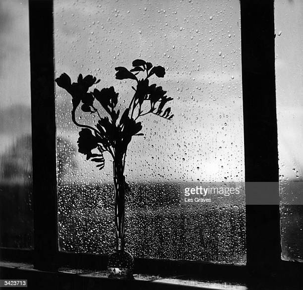 A vase of freesias next to a window covered in raindrops