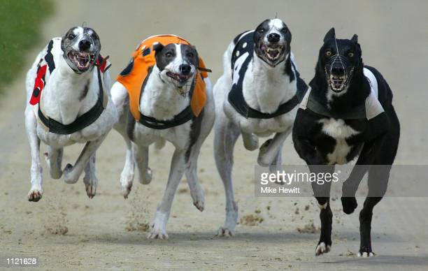 L to R Fierce Gale Vintage PowerRio Picaso and Broadacres Delta compete in the fifth race at Hove Sussex DIGITAL IMAGE Mandatory Credit Mike...