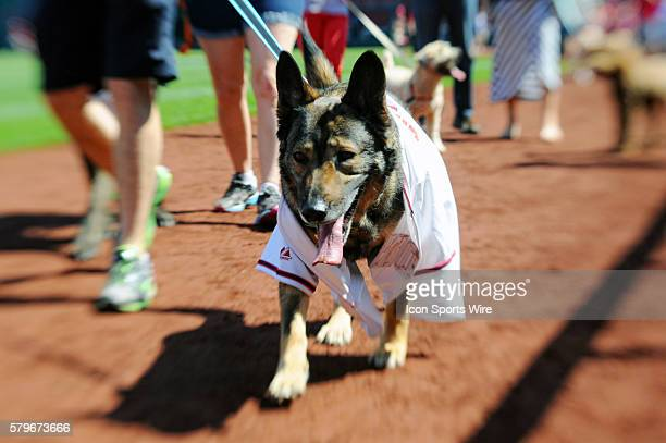 A dog parades around on the warning track during the
