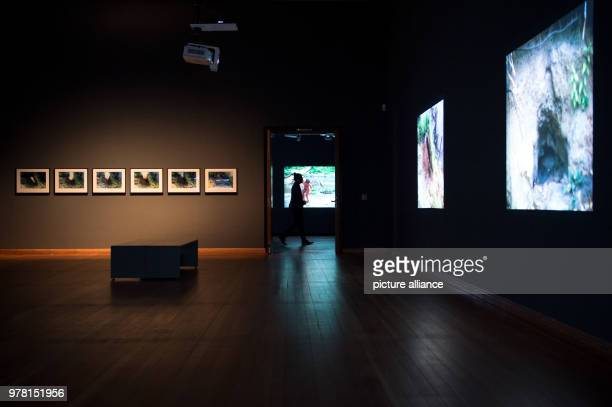 A man walks through the exhibition 'Covered in Time and History The Films of Ana Mendieta' at Martin Gropius Bau Photo Lisa Ducret/dpa