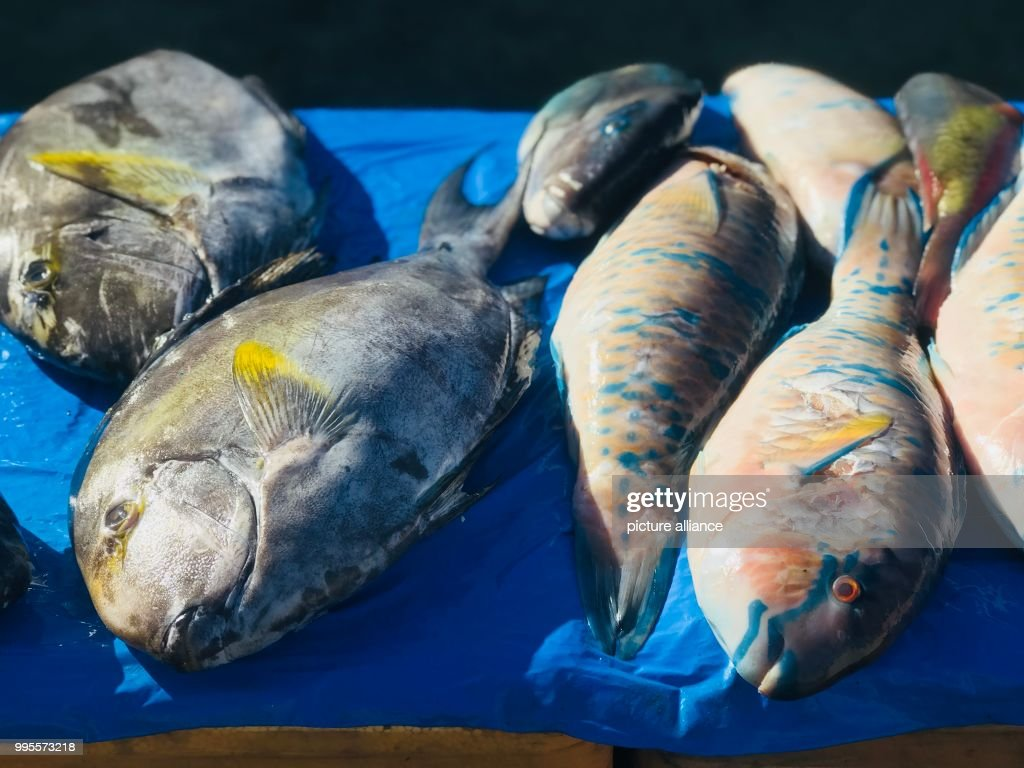 Colourful, tropical fish are displayed for sale at a market