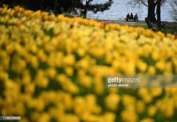 20 April 2019 BadenWuerttemberg Mainau Tourists sit on the flower island Mainau in front of a sea of tulips and enjoy the summer temperatures Photo...