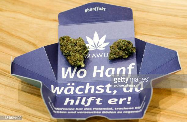 At the International Cannabis Business Conference ICBC dried hemp buds are lying on a packaging with the inscription Where hemp grows it helps at an...