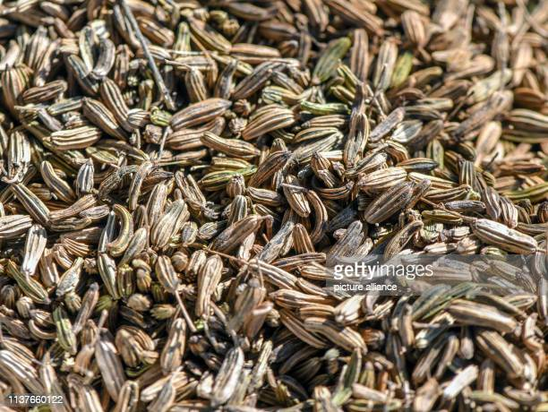 The seeds of the fennel lie in a shell Photo Patrick Pleul/dpaZentralbild/ZB