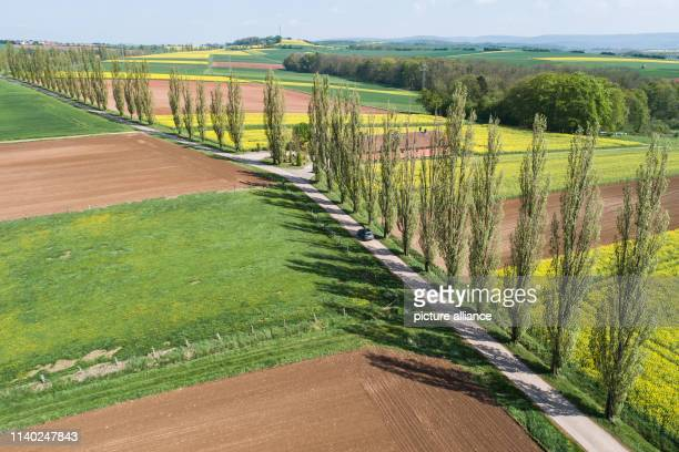 A car drives on a farm road near Duderstadt in Eichsfeld along blooming rape fields Photo Swen Pförtner/dpa