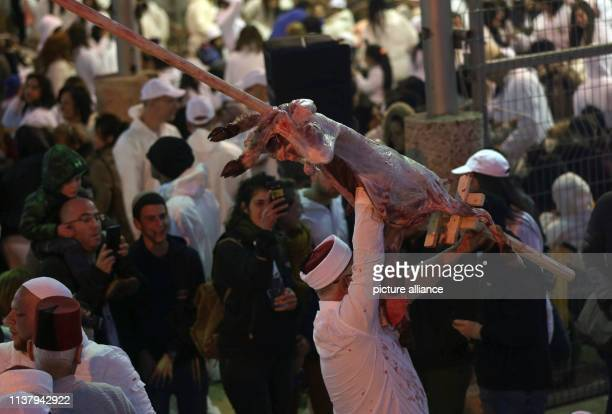 18 April 2019 Palestinian Territories Garizim A man carries a lamb on a large skewer as members of the Samaritan community prepare Passover Lambs for...