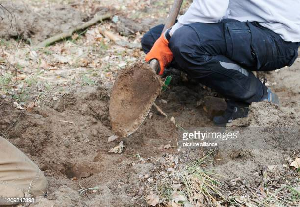 Gernot Kleinlein entrepreneur plants seedlings of hornbeam winter linden sycamore maple and English oak In a piece of woodland in NutheNieplitz...