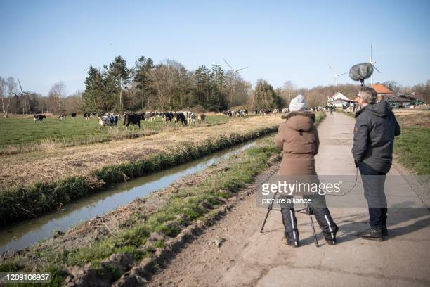 """April 2020, Lower Saxony, Brake: A television crew is filming the grazing. """"Off to pasture!"""" - according to this motto, the winter and stable time..."""